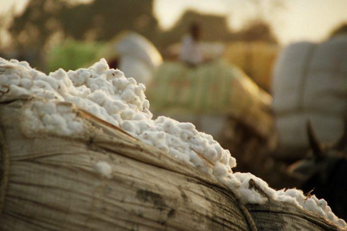 cotton-egyptian